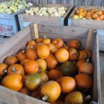 06 Citrouilles - Pumpkins