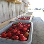 07 Tomates italiennes - Paste Tomatoes
