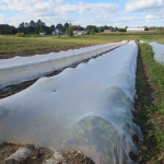 16 Rangs entiers sous bâche - Whole Rows with Netting