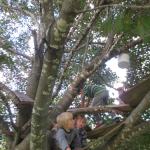 30 Dans les arbres - Treehouse