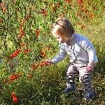 Mechoui-fillette et tomates-little girl and tomatoes-SB