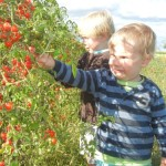 Frères et tomates cerise / Brothers and Cherry Tomatoes (Gillian Murray)