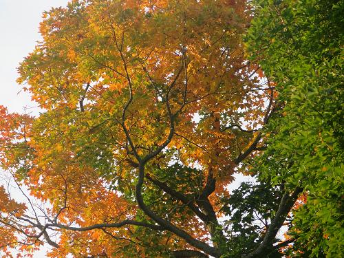 Couleurs d'automne - Fall Colours