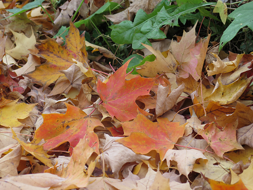 Feuilles au sol - Fallen Leaves