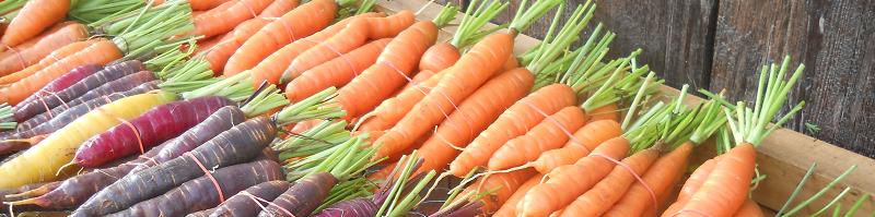2015 - Carottes, Carrots