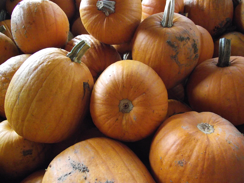 Citrouilles symphoniques - Symphonic Pumpkins