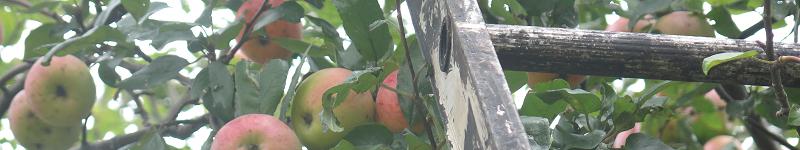Escabeau Pommier Coach House Apple Tree Ladder