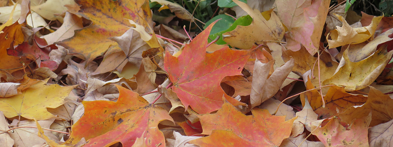 Feuilles d'automne - Fall Leaves