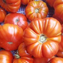 Plaid Tomatoes