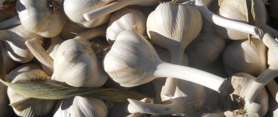 Garlic - Ail 1