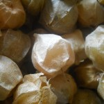Ground cherries - cerises de terre