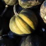 Courge poivree - Acorn Squash