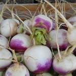 Rabioles - Turnips