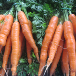 Carottes en botte - Bunched Carrots