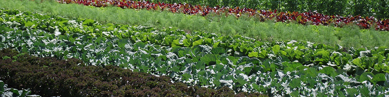 2015 - Verdures, Greens