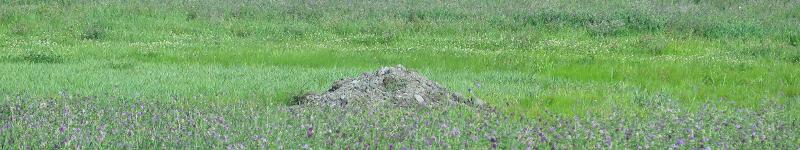 Étang ou champ - Pond or Field