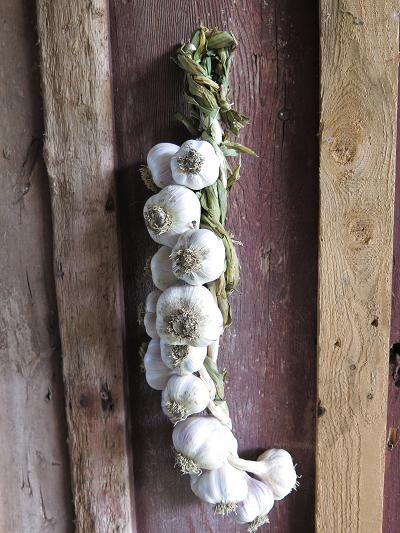 Tresse d'ail - Garlic Braid