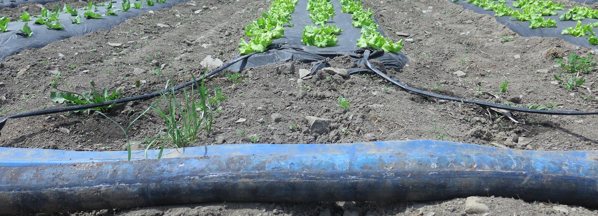 Irrigation en action - Irrigation at Work