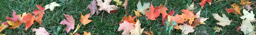 Feuilles dans l'herbe - Leaves in the Grass