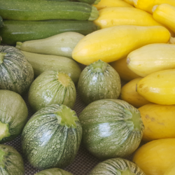SummerSquashCourges