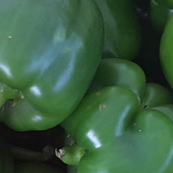 Green pepper pic