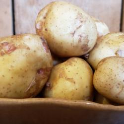Potatoes_Samson et fils